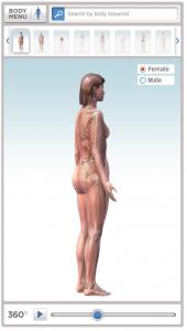 corpo-umano-3d